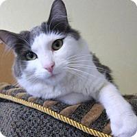 Adopt A Pet :: Mucha - Prescott, AZ
