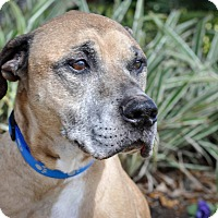 Adopt A Pet :: T-Bone - Gainesville, FL