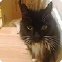 Adopt A Pet :: Bilbo - Vancouver, BC