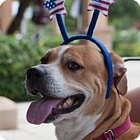 Adopt A Pet :: Vicki - Holmes Beach, FL