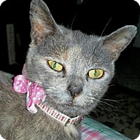 Adopt A Pet :: Solitaire - Winterville, NC
