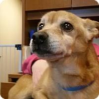 Adopt A Pet :: Duke (2015) - Rochester, MN