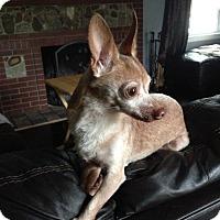Adopt A Pet :: Senior for Senior Program - Crown Point, IN