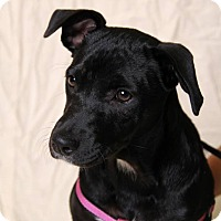 Adopt A Pet :: Holly - Jackson, TN