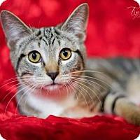 Adopt A Pet :: Randell - Little Rock, AR