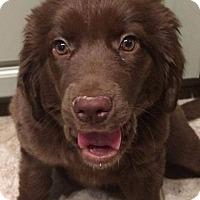 Adopt A Pet :: Leah - Charlestown, RI