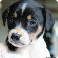 Adopt A Pet :: Joslyn - Bedford, VA