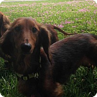 Adopt A Pet :: Alex and Max - E. Greenwhich, RI