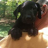 Adopt A Pet :: Max - Charlestown, RI