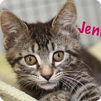 Adopt A Pet :: Jenny - Baton Rouge, LA