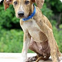 Adopt A Pet :: Jojo - Waldorf, MD