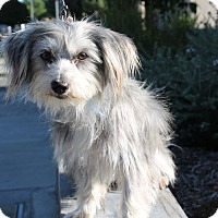 Adopt A Pet :: Sprite - Los Angeles, CA
