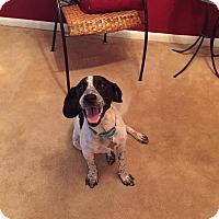 Adopt A Pet :: Gabby Douglas - Jersey City, NJ