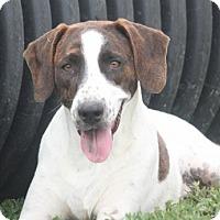 Adopt A Pet :: Hawke NEW PICS - Cranston, RI