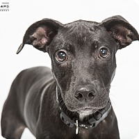 Adopt A Pet :: Clyde - in Maine - kennebunkport, ME