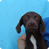 Adopt A Pet :: Cosmos - Oviedo, FL