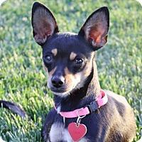 Adopt A Pet :: Ophelia - 7 lbs! - Yorba Linda, CA