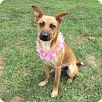 Shepherd (Unknown Type) Mix Dog for adoption in Lexington, North Carolina - Brooke