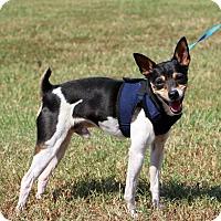 Adopt A Pet :: Nico~ meet me! - Glastonbury, CT