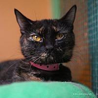 Adopt A Pet :: Jem - Tucson, AZ
