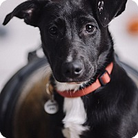 Adopt A Pet :: Logan - Portland, OR