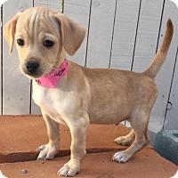 Adopt A Pet :: Merrit - Tucson, AZ