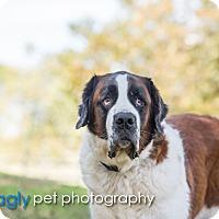 Adopt A Pet :: Sebastian - McKinney, TX
