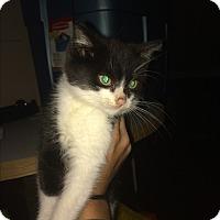 Adopt A Pet :: Minus - Montreal, QC