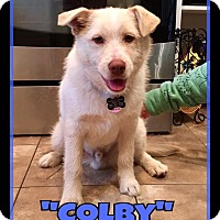 Adopt A Pet :: Colby - Duchess, AB