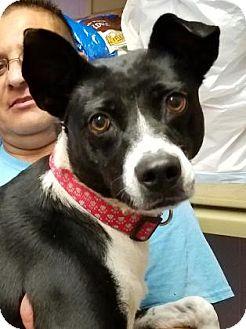 Mixed Breed (Medium) Mix Dog for adoption in Las Cruces, New Mexico - Roxi