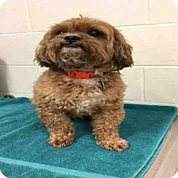 Adopt A Pet :: ROCKY - Upper Marlboro, MD
