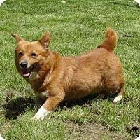Adopt A Pet :: Megan ADOPTED!! - Antioch, IL