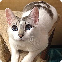 Adopt A Pet :: Libby - Foothill Ranch, CA