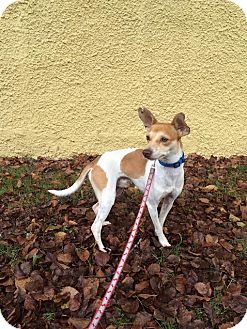 Dog Adoption In Vancouver Bc