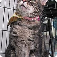 Adopt A Pet :: Nefi - Lakewood, CO