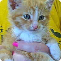 Adopt A Pet :: Brinkley - Island Park, NY
