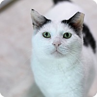 Adopt A Pet :: Mayday - Chicago, IL