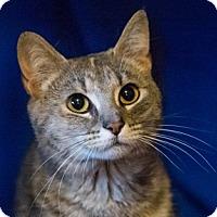 Adopt A Pet :: Karmalita - Calgary, AB