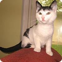 Adopt A Pet :: Moo - Colmar, PA