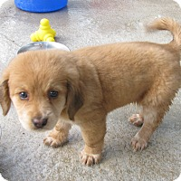Adopt A Pet :: Aviary - Charlemont, MA