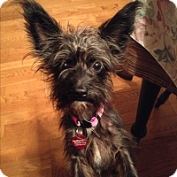 Adopt A Pet :: Aimee - Brea, CA