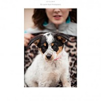 Adopt A Pet :: Puppy 2 - Edmond, OK