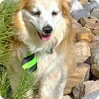 Adopt A Pet :: Trooper - Pueblo, CO