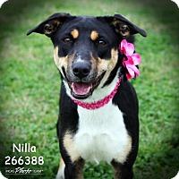 Adopt A Pet :: NILLA - Conroe, TX