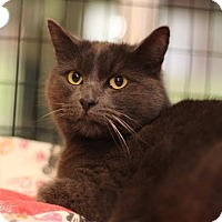 Adopt A Pet :: Grayson - Grants Pass, OR