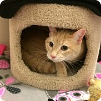 Adopt A Pet :: Christmas - McHenry, IL
