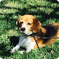 Adopt A Pet :: Cara - Tampa, FL