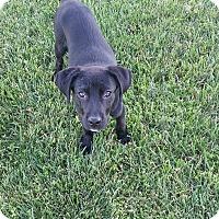 Adopt A Pet :: Silas - available 6/6 - Sparta, NJ