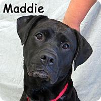 Adopt A Pet :: Maddie - Warren, PA