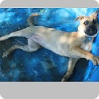 Adopt A Pet :: Sammi - Pittsboro, NC